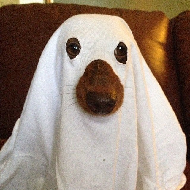 Halloween Costumes: Ghost