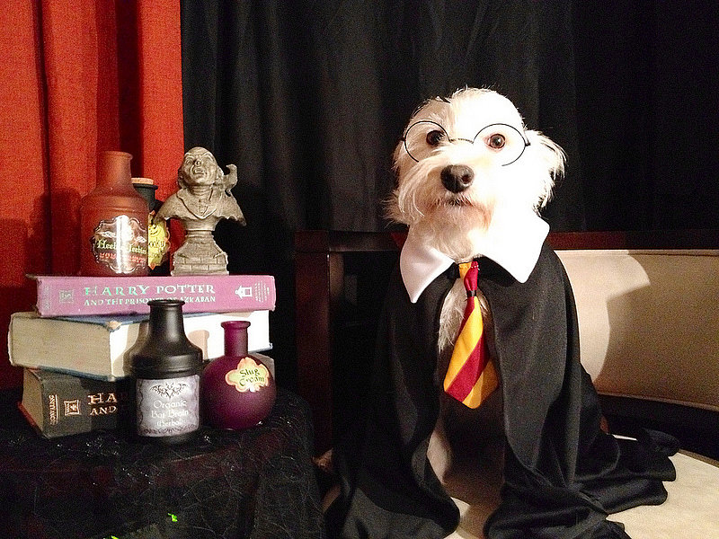 Halloween Costumes for Pets: Harry Potter