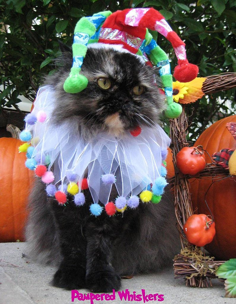 Halloween Costumes For Pets: Jester