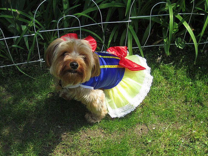 Halloween Costumes: Snow White