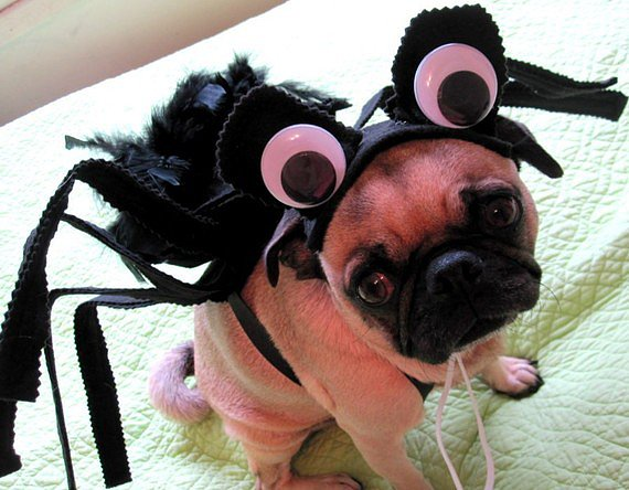 Halloween Costumes: Sad Spider