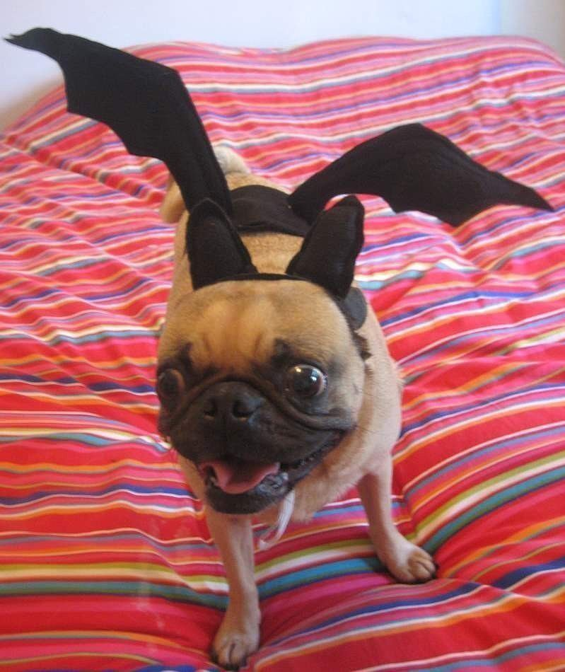 Halloween Costumes: Vampire Bat