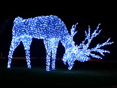 LED Christmas Reindeer