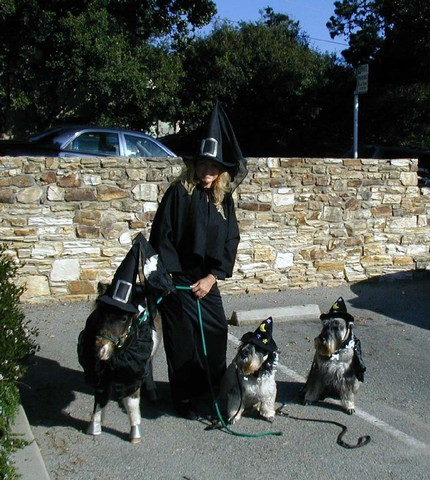 halloween-costumes-pets-horse-dogs