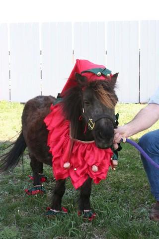 Halloween Costumes: Horses