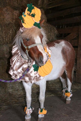 Halloween Costumes: Pony
