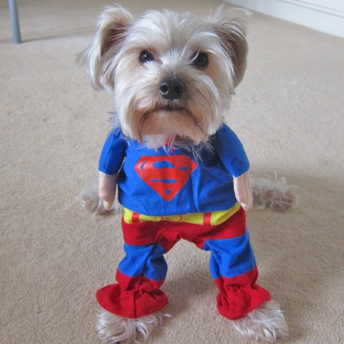 Halloween Pets Costume: Super Hero